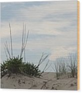 Delaware Sand Dune Wood Print