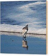 Sanderling 003 Wood Print