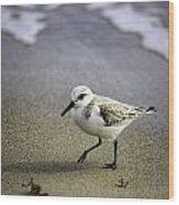 Sanderling On The Shore Wood Print