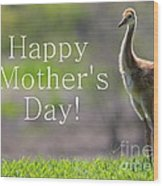 Sandhill Chick Mother's Day Card Wood Print