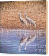 Sandhill Crane 11 Wood Print
