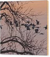Sandhill Crane Across The Sky Wood Print