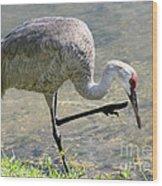 Sandhill Crane Balancing On One Leg Wood Print by Sabrina L Ryan