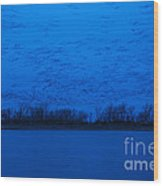 Sandhill Crane Blue Hour Wood Print