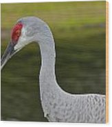 Sandhill Crane Close Up Wood Print