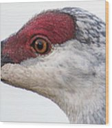 Sandhill Crane Eye Wood Print