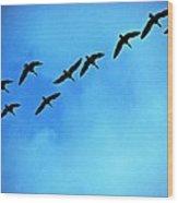 Sandhill Crane Flyover Wood Print