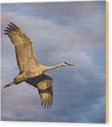 Sandhill Crane In Flight Wood Print