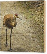 Sandhill Crane On The Road Wood Print