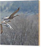 Sandhill Crane Pair 2 Wood Print