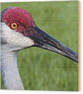 Sandhill Crane Portrait Wood Print