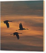 Sandhill Crane Sunset Wood Print