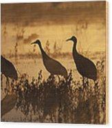 Sandhill Crane Trio At Sunrise Bosque Wood Print