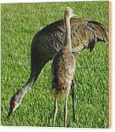 Sandhill Crane With Chick II Wood Print