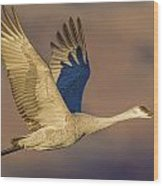 Sandhill Crane Young Adult Wood Print
