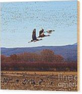Sandhill Cranes 6 Wood Print