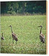 Sandhill Cranes And Friends Wood Print