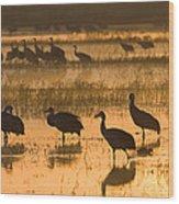 Sandhill Cranes Bosque Del Apache Nwr Wood Print