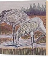 Sandhill Cranes Feeding Wood Print