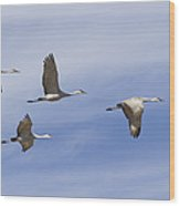 Sandhill Cranes Grus Canadensis Flying Wood Print