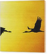 Sandhill Cranes In Flight Wood Print