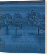 Sandhill Cranes In The Dark Bosque Del Apache Wildlife Refuge  Wood Print