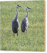 Sandhill Cranes In Wisconsin Wood Print