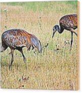 Sandhill Cranes Ll Wood Print
