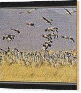Sandhill Cranes On The Ground Wood Print