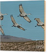 Sandhill Cranes Over Chupadera Mountains Wood Print