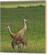 Sandhill Cranes Wood Print