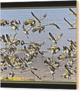 Sandhill Cranes Startled 2 Wood Print