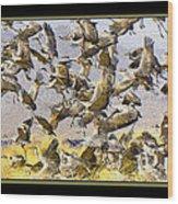 Sandhill Cranes Startled Wood Print