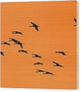 Sandhill Sunrise Wood Print by T C Brown