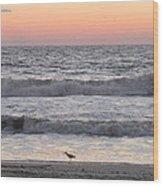 Sandpiper At Sunrise Wood Print