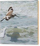 Sandpiper Flight Wood Print