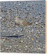 Sandpiper Galveston Is Beach Tx Wood Print