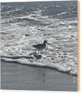Sandpiper In The Surf Wood Print
