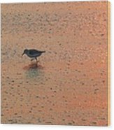 Sandpiper On Shoreline Wood Print