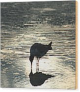 Sandpiper Reflection Wood Print