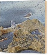 Sandpipers On Coral Beach Wood Print