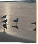 Sandpipers And Seagulls Wood Print