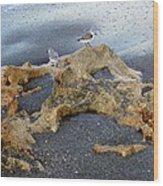 Sandpipers 1 Wood Print