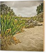 Sands And Grass Of Elafonisi Wood Print