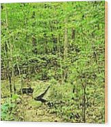Sandstone Glade Of Shades Mountain Wood Print