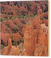 Sandstone Hoodoos At Sunrise Bryce Canyon National Park Utah Wood Print