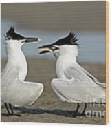 Sandwich Tern Offering Fish Wood Print