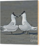 Sandwich Terns Wood Print