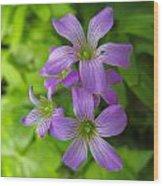 Sandy Creek Wildflowers Wood Print
