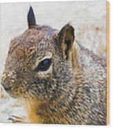 Sandy Nose Squirrel Wood Print